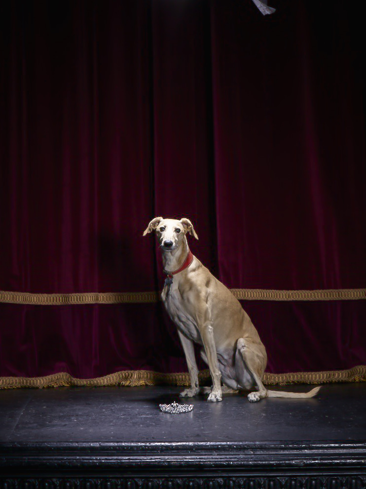 Battersea Dogs Home Data