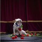 Marjorie of Battersea Dogs & Cats Home on stage at Richmond Theatre