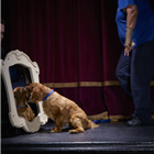 Holly of Battersea Dogs & Cats Home on stage at Richmond Theatre
