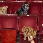 The dogs of Battersea Dogs & Cats Home at Richmond Theatre