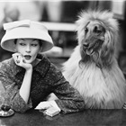 Dovima with Sacha, cloche and suit by Balenciaga, Café des Deux Magots, Paris, 1955. Photograph by Richard Avedon © The Richard Avedon Foundation