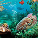 Book Under the Sea 3D Tickets